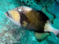 Scuba diving Moalboal 025