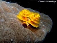Scuba diving Moalboal 027