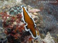 Scuba diving Moalboal 028