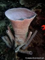Scuba diving Moalboal 043