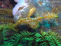 Scuba diving Moalboal 045