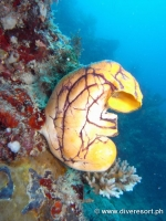 Scuba diving Moalboal 047