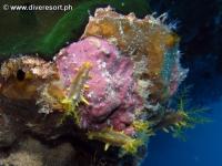 Scuba diving Moalboal 049