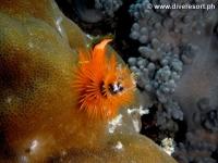 Scuba diving Moalboal 055