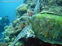 Scuba diving Moalboal 059