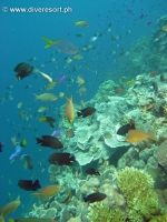Scuba diving Moalboal 060