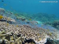 Scuba diving Moalboal 061