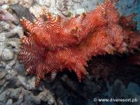 Scuba diving Moalboal 066