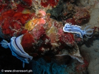 Scuba diving Moalboal 069