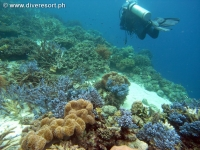 Scuba diving Moalboal 071