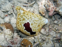 Scuba diving Moalboal 075