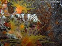 Scuba diving Moalboal 077