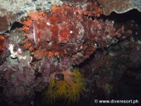 Scuba diving Moalboal 078
