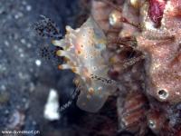 Scuba Diving 26
