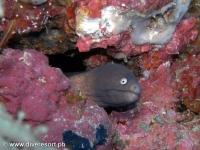 Scuba diving Moalboal 083