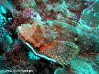 Scuba diving Moalboal 086