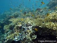 Scuba diving Moalboal 093