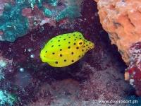 Scuba diving Moalboal 095