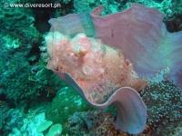 Scuba diving Moalboal 099