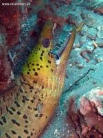 Scuba Diving 29
