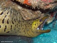 Scuba Diving 30