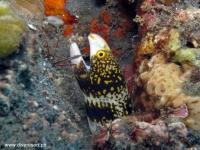 Scuba Diving 31