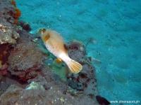 Scuba Diving 33