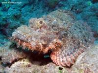 Scuba Diving 35