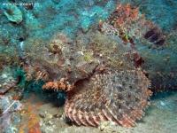 Scuba Diving 36
