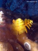 Scuba Diving 39
