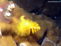 Scuba Diving 40