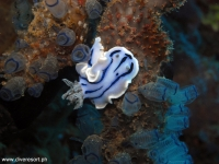 Scuba Diving 41