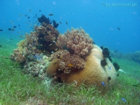 Scuba diving Panglao Island 03