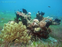 Scuba diving Panglao Island 04