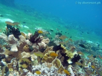 Scuba diving Panglao Island 06