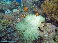 Scuba diving Panglao Island 07