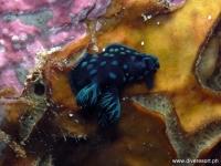 Scuba Diving 42