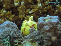 Scuba diving Panglao Island 15