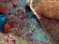 Scuba Diving 45