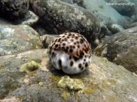 Scuba Diving 57