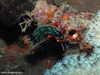 Scuba Diving 60