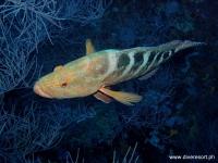 Scuba Diving 66