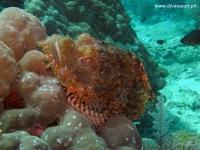 Scuba Diving 68