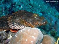 Scuba Diving 69
