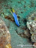 Scuba Diving 70