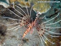 Scuba Diving 73