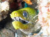 Scuba Diving 74