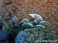 Scuba Diving 78