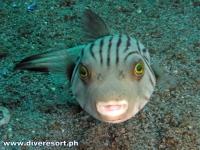Scuba Diving 82
