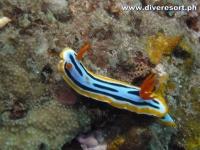 Scuba Diving 91